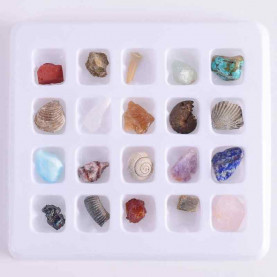 20 Pcs /box Fossils Minerals Specimen Teaching School Mineral Collections Fossil Rocks Display Home Decor Mineraalstukken Stone